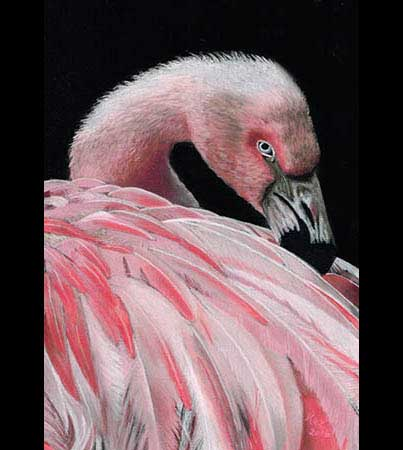 Wildlife Pastels